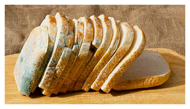 Photo of Küflü Ekmeğin Küfsüz Tarafını Yediğinizde Vücudunuzda Bunlar Oluyor