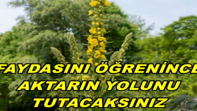 Photo of FAYDASINI ÖĞRENİNCE AKTARIN YOLUNU TUTACAKSINIZ