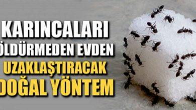 Photo of Zarar Vermeden Karıncaları Evden Kovabilmeniz İçin 5 Ucuz Ve Doğal Yöntem