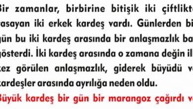 Photo of İKİ KÜS KARDEŞİN HİKAYESİ